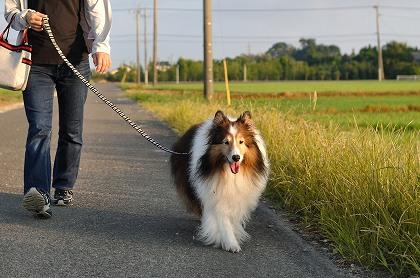 笑顔のお散歩