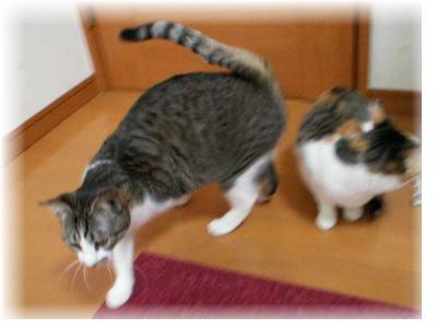 70匹の猫たちのアクビちゃん&あらんちゃん