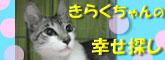 Pikoさん発信~きらくちゃんの幸せ探し