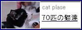 70匹の猫達