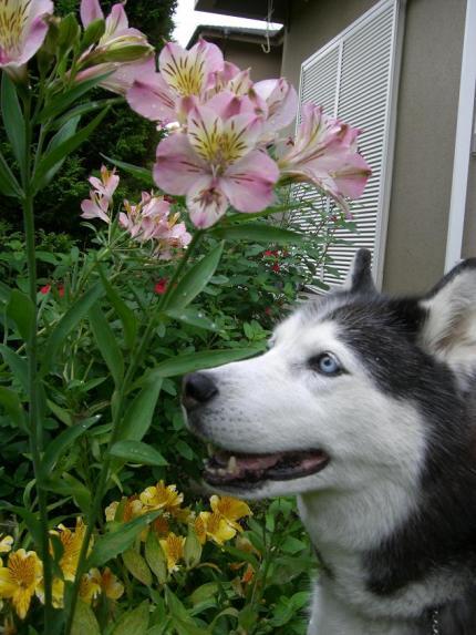 see flowers