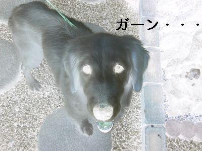 20061109214102.jpg