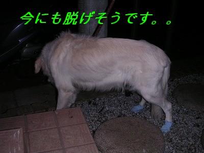 20061211212631.jpg