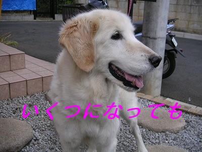20061217005015.jpg