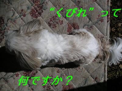 20070118213832.jpg