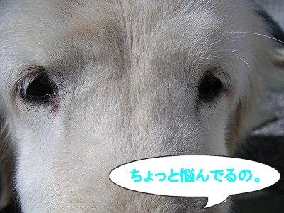 20070218014809.jpg