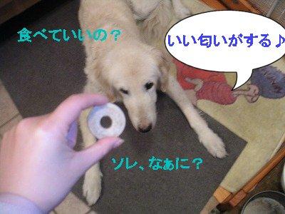 20070323211735.jpg