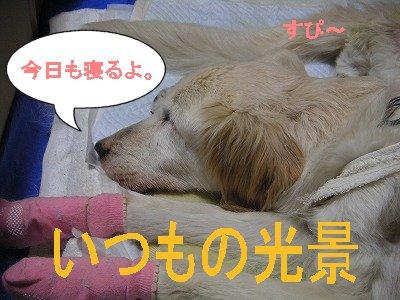 20070610111003.jpg