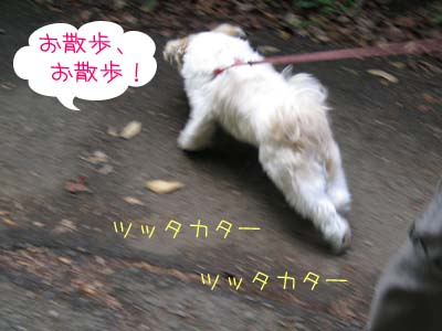 IMG_0519・お散歩