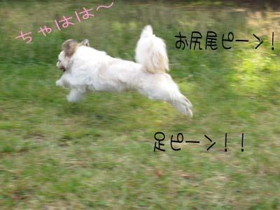 IMG_0532・ピーン
