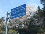 麓はちょうど桜が満開でした★