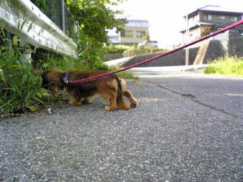 ペット 犬 散歩
