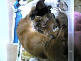子犬 出産