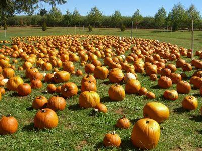 AppleHillPumpkin.jpg