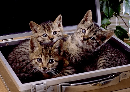 cat0044-026_m.jpg