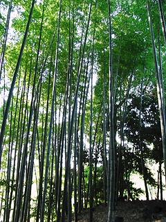高台寺竹林