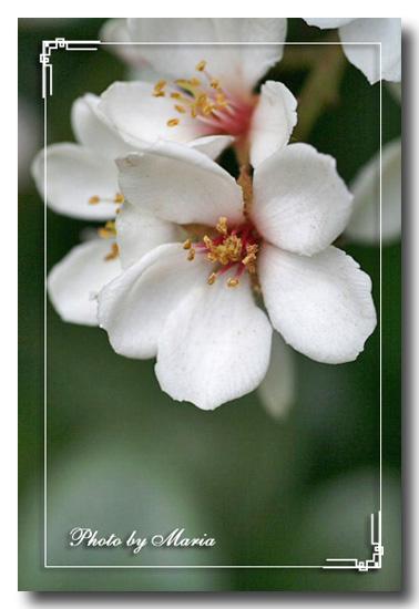 syarinbai-0706-2.jpg