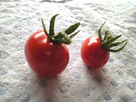 tomato2007062905.jpg