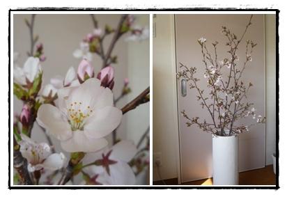 桜(飯山)