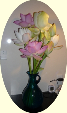 蓮の花817