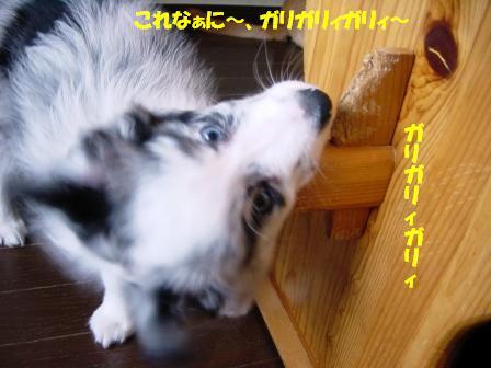 20070409211033.jpg