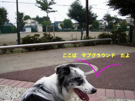 DSC00869.jpg