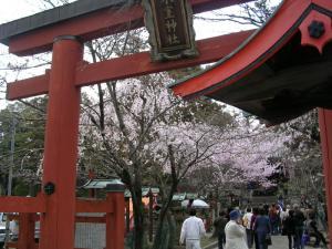 氷室神社の桜
