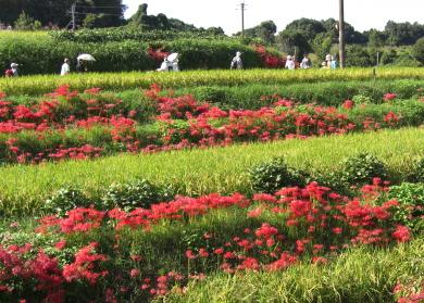明日香村の風景 秋