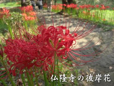 仏隆寺の彼岸花