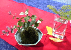 まゆの作った苔玉