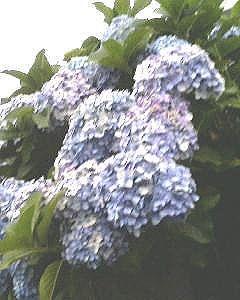 2007.6.22-3.jpg