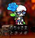 Maple1469-1.jpg