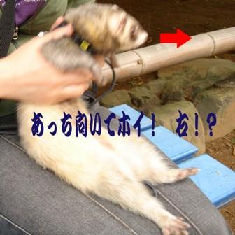 20060924193316.jpg