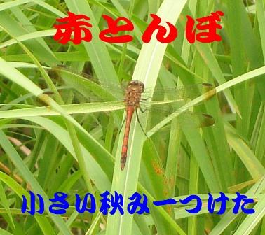 20060924194240.jpg