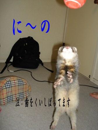 20061103221509.jpg
