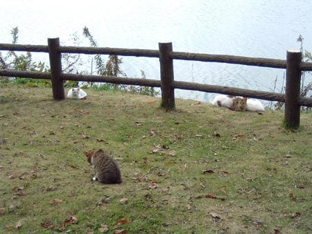 下妻池の猫