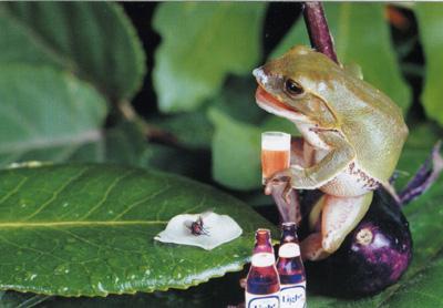 カエルのこころ1P