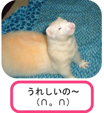 タイガ微笑2