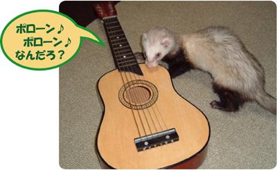 タムとギター