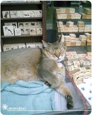浅草橋看板猫
