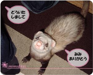 多夢&mimi