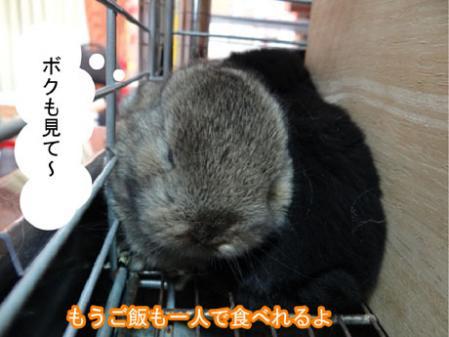 05_20120330180041.jpg