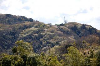 20060331 太田和つつじの丘