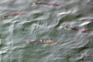 20070502 諸磯湾