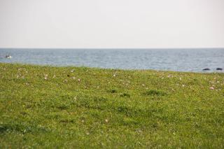 20070511 大浜海岸