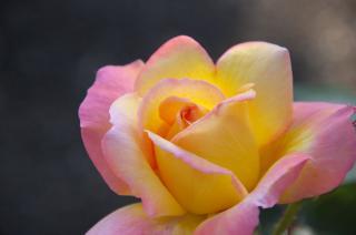 20070519 ベルニー公園 バラ