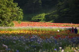 20070521 花の国