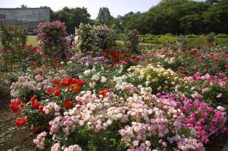 20070526 神代植物園