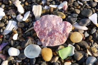 金田海岸 シーグラス 貝殻 石ころ 070213