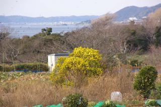 長井 黄色い花 20070225